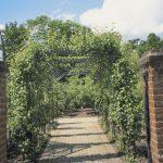 Spalieranbau mit Obstbäumen: Laubengang Birne