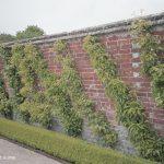 Schräge-Schnurbäume