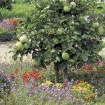 Apfel-Kugelbaum