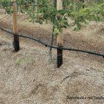 Dammkultur mit Tropfbewässerung