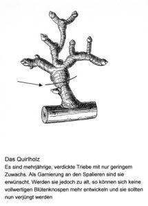 Das Quirlholz