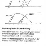 Physiologische Blütenbildung